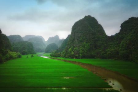 cánh đồng xanh mướt du lịch ninh bình